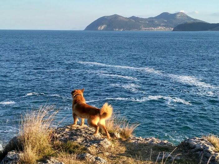 Apartamentos, Cantabria, playa, perros, casa rural, Noja